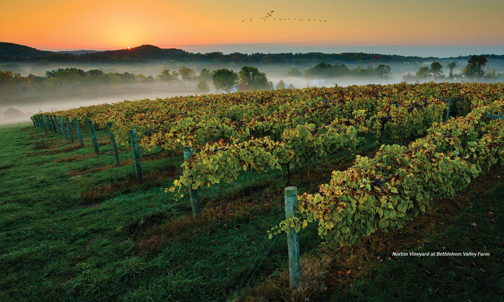 Bethlehem Valley Vineyards